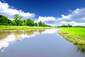 River in rice meadow — Stock Photo