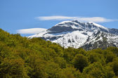 Snowy mountain against the spring forest in Pyrenees — Stock Photo
