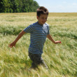 Boy running on the wheat field — Stock Photo