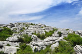 Spring view of El Torcal nature reserve — Stock Photo