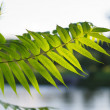 Sunlit leaf against the blurred park. — Stock Photo