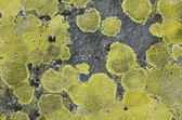 Surface stone with green lichen. — Stock Photo
