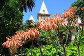 Lush greenery of the Sama Park in Tarragona — Stock Photo