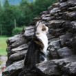 Cat on the stone roof — Stock Photo