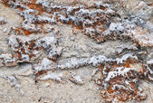 Background of the coral sediment fossilized — Stock Photo