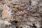 Coral sediment petrified — Stock Photo