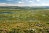 Green plateau with many small lakes. Swedish Lapland in summer. — Stock Photo