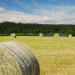 Gathered field with straw bales — Stock Photo #39837711