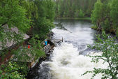 Summer view of the Oulanka national park. — Stock Photo
