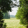 Stock Photo: Hayfield through clearing in woods