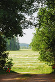 Hayfield through clearing in the woods — Stock Photo
