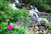 Waterfall in the middle of the green bushes. — Stock Photo