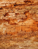 Texture of old trunk, close-up — Stock Photo