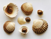 Sea clams and stones — Stockfoto
