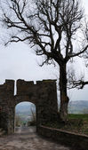 Silhouettes of old gate and bare tree — Stock Photo