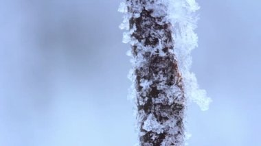 Hoarfrost on branches of bushes. St. Petersburg. Russia — Vídeo de stock
