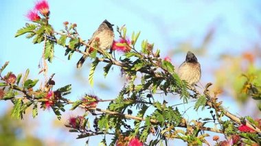 Birds in Indian city — Stock Video