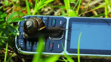 Snail crawling on a cell phone — Stock Video