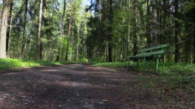 Parco di pavlovsk. san pietroburgo. russia. — Video Stock