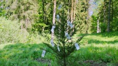100 dollar bills hanging on spruce — Stock Video