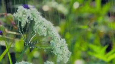 Rain on leaves — Stock Video