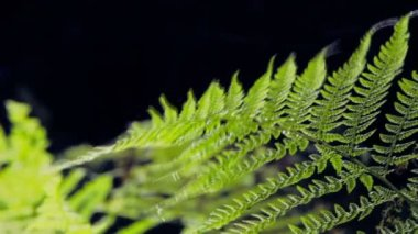 Fern in the forest — Stock Video