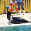 Seals show in marine park — Stock Photo #33501645