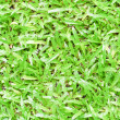 Stock Photo: Green lawn.