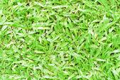 зеленый газон. — Стоковое фото