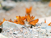 Butterfly . — Stock Photo