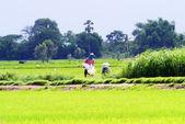 Agricultores no campo — Fotografia Stock
