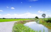 Field in blue sky. — Stock Photo