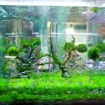 Fish tank. — Stock Photo #37221099