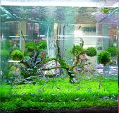 Fish tank. — Stock Photo