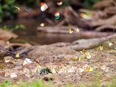 Butterfly . — Stockfoto