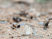 Butterfly . — Zdjęcie stockowe