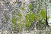 Green moss . — Stockfoto