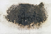 Black mold. — Stock Photo