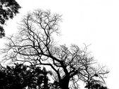 Tree silhouette . — Stock Photo