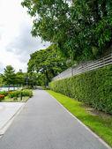 Park on summer — Stok fotoğraf