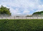 Green plant wall . — Photo