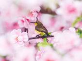 Sun bird . — Zdjęcie stockowe