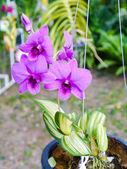 Kolorowe orchidea. — Zdjęcie stockowe