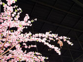 Sakura flowers  — Stock Photo