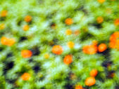 Flowers bokeh  — Stock Photo