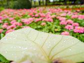 Water drops  leaves. — Foto Stock