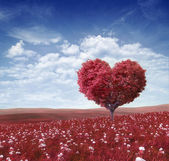 Ree in the shape of heart, valentines day background — Stok fotoğraf
