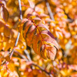 Autumn pattern — Stock Photo