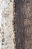tree rind insite texture close up — Стоковое фото