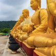Row of golden buddha statue — Photo